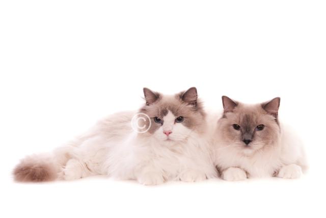 katten-11066-Toby en Youp