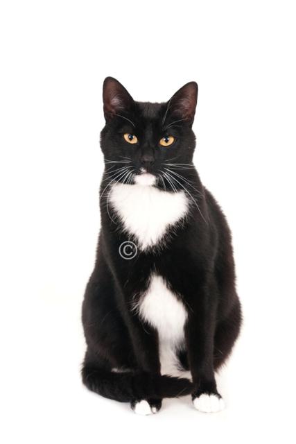Zwart-witte kat (1 of 1)-imp.jpg