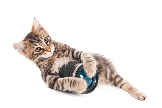 Kitten holding a camera lens, isolted on white (1 of 1).jpg