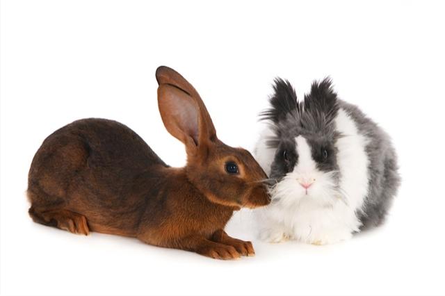 konijnen-11145-Felix en Frützl