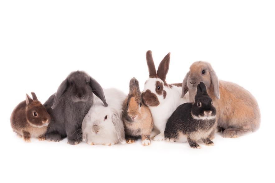 11201-diverse konijnen