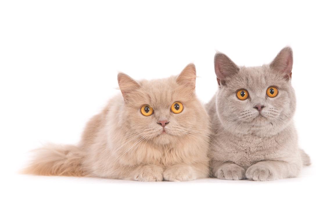 kat-11255-Nala en Faye