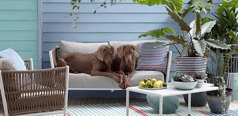 470-230-contentheader-huisdieren-wk16.jpeg