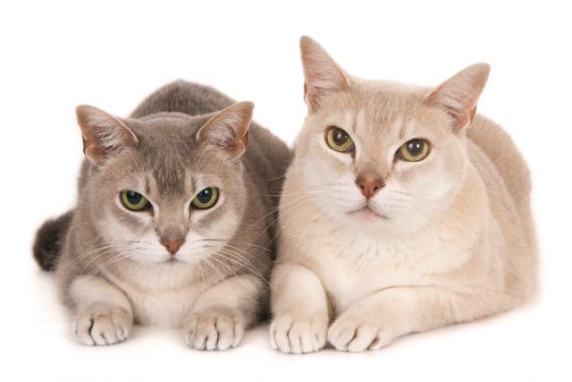 katten-30036-Amelie en Mika