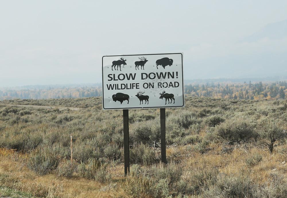 wildlife on road