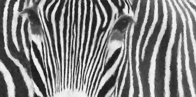 PalyStrant_Zebra_B&W_Large.jpg