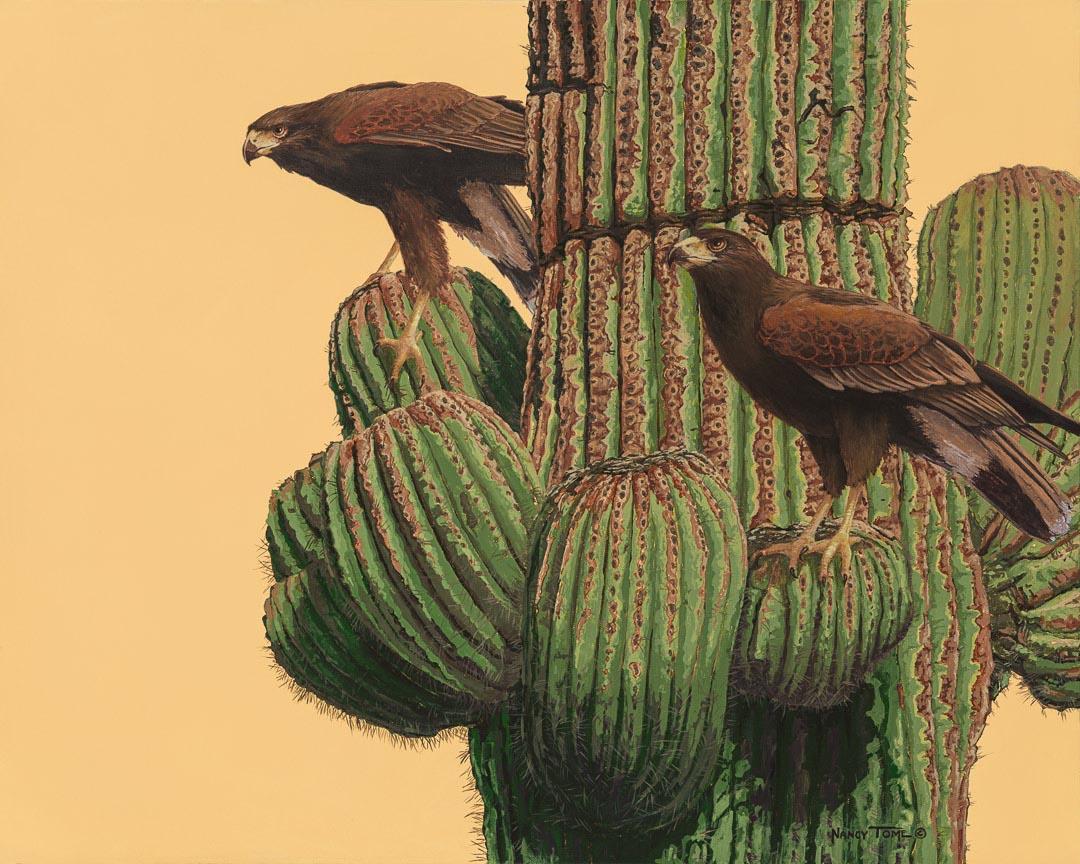 Desert Duo, Harris Hawks, Saguaro Cactus, Nancy Tome, bird art, wildlife prints artists