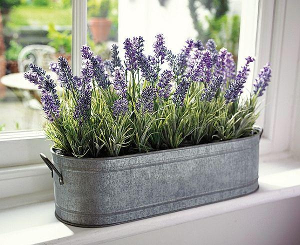 Photo credit: http://www.gardeningclan.com/