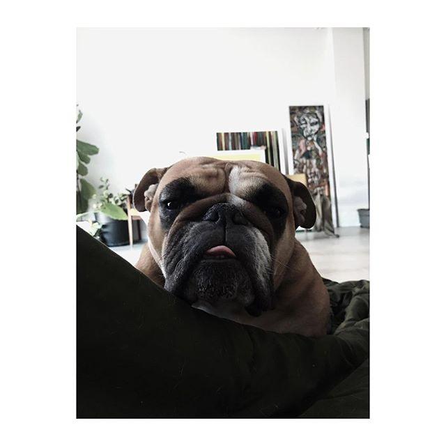 | 3 | My big girls birthday! #love #bulldogs #grownwoman #englishbulldog #tongue #mansbestfriend #sleep #happy #best #everyday #instagood #instalove #instapic #atl #atlanta #poncecitymarket #art #mananddog #design #green