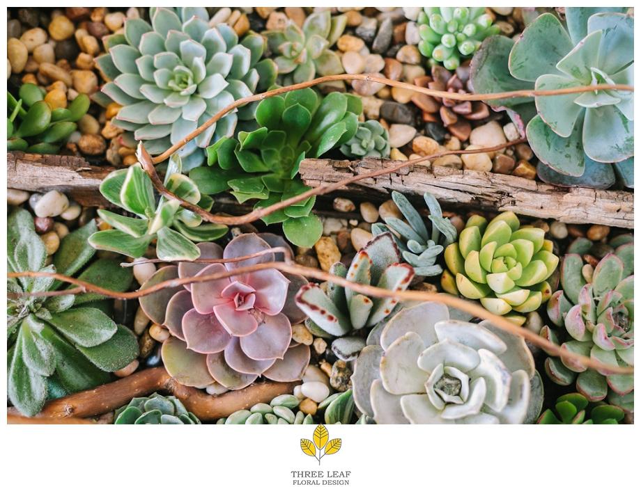 Western Colorado Succulents