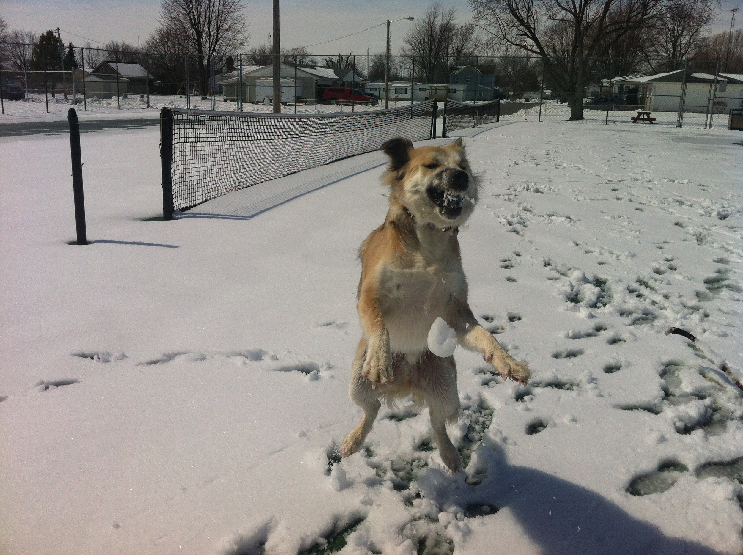 killing time, throwing snowballs to gussie.