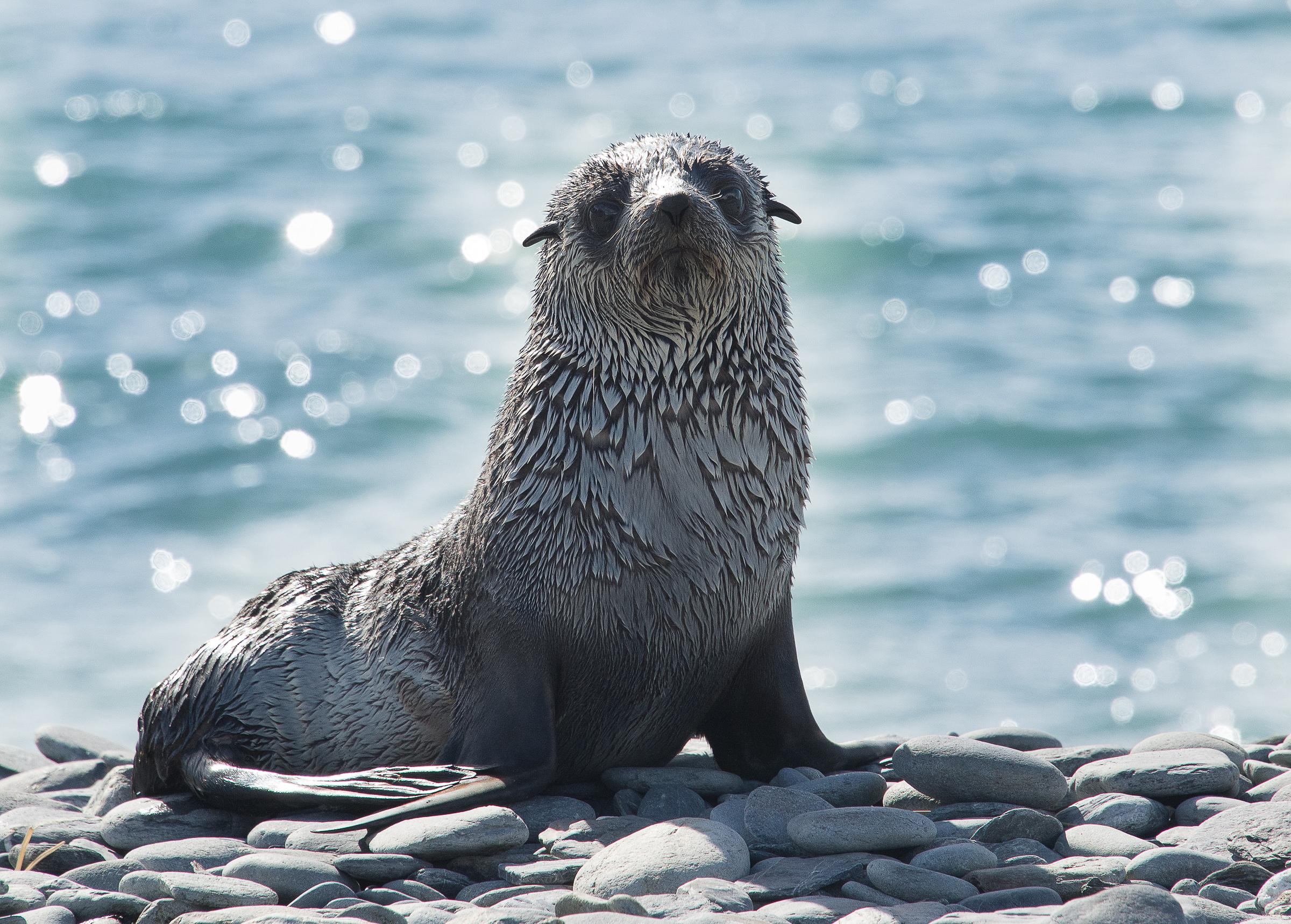 baby seal.jpg
