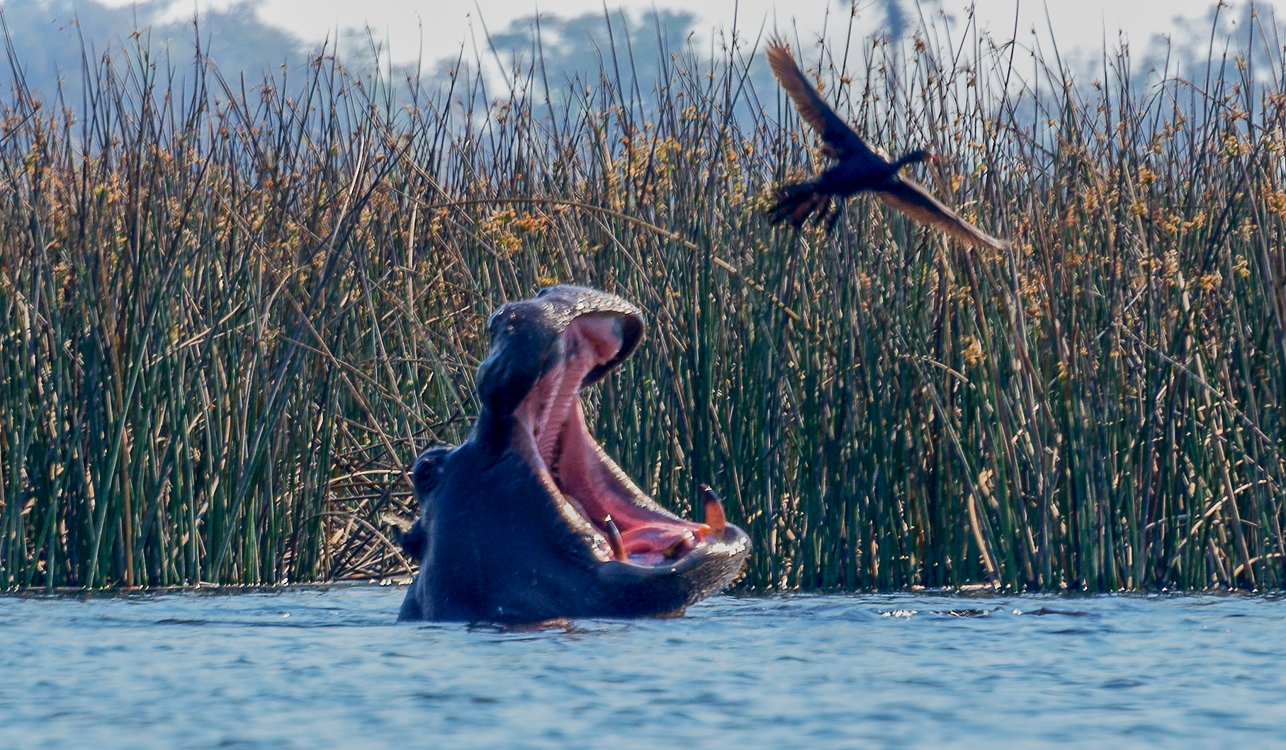 Hippo and Bird (1 of 1).jpg