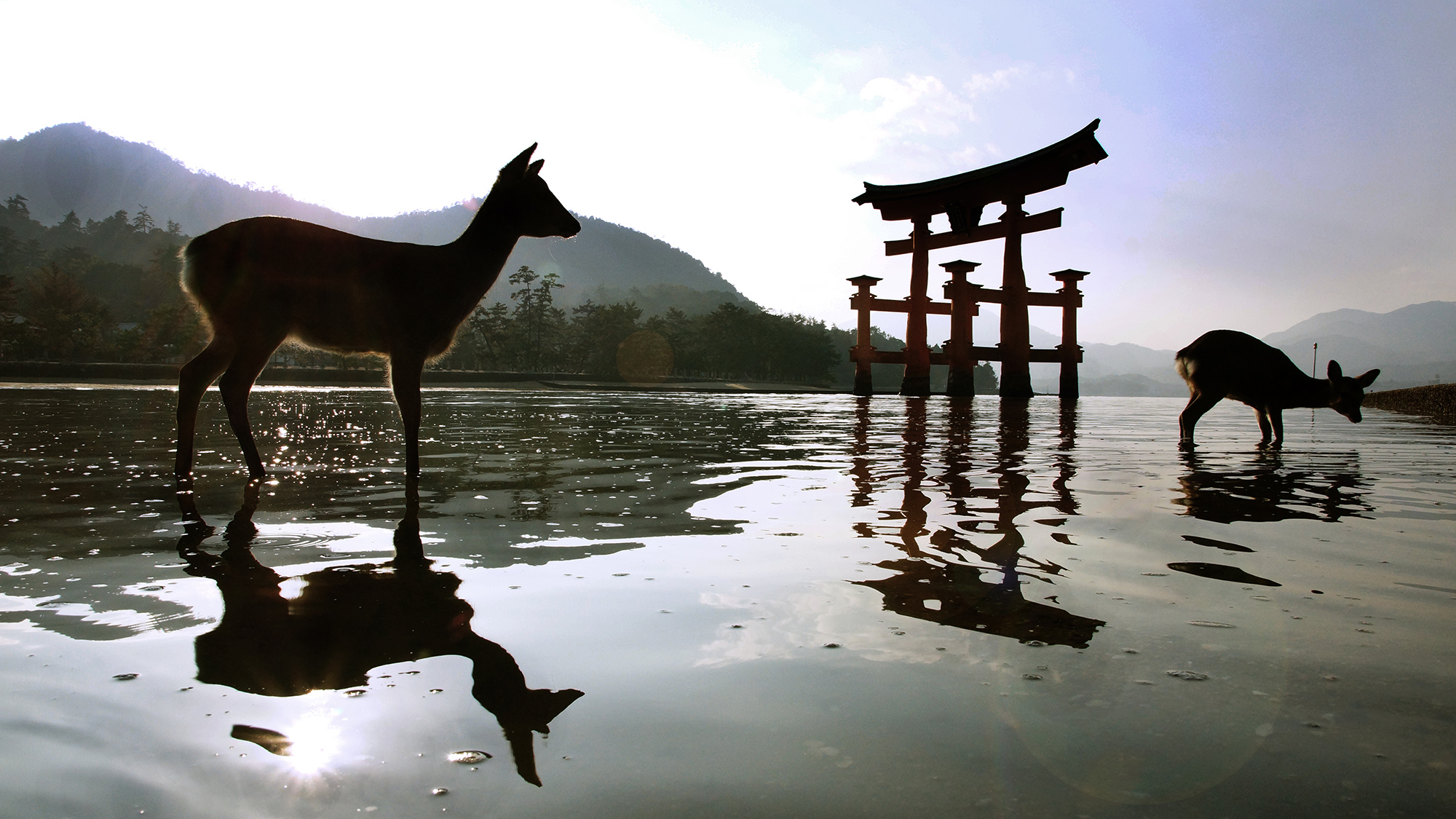 DEER DIARY - JAPAN   I have visited this beautiful shrine many times and never tire of the amzing sunsets and if you get your feet wet, the many deer on the island will almost pose for you.