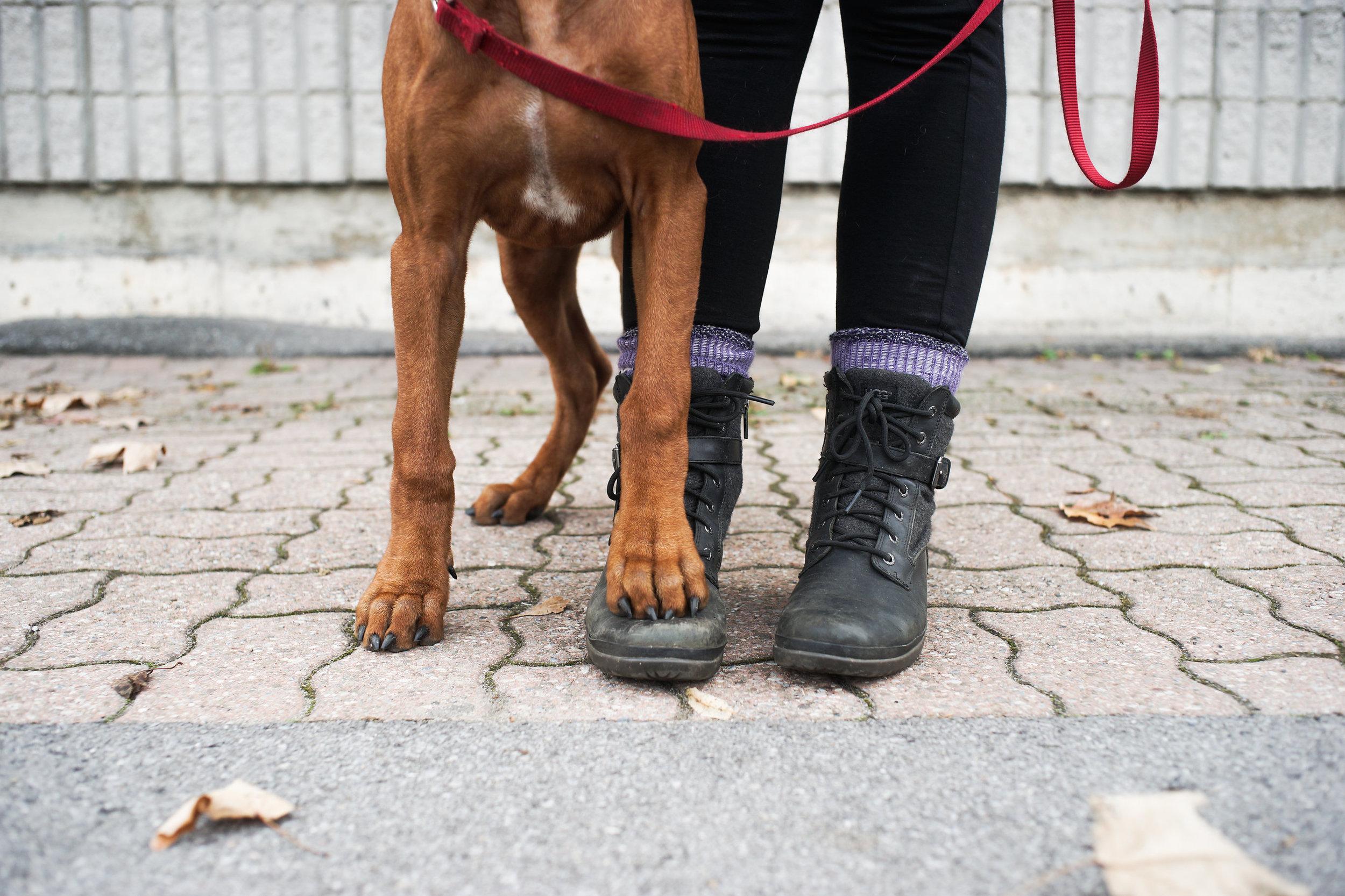 Privates, Puppies & More -