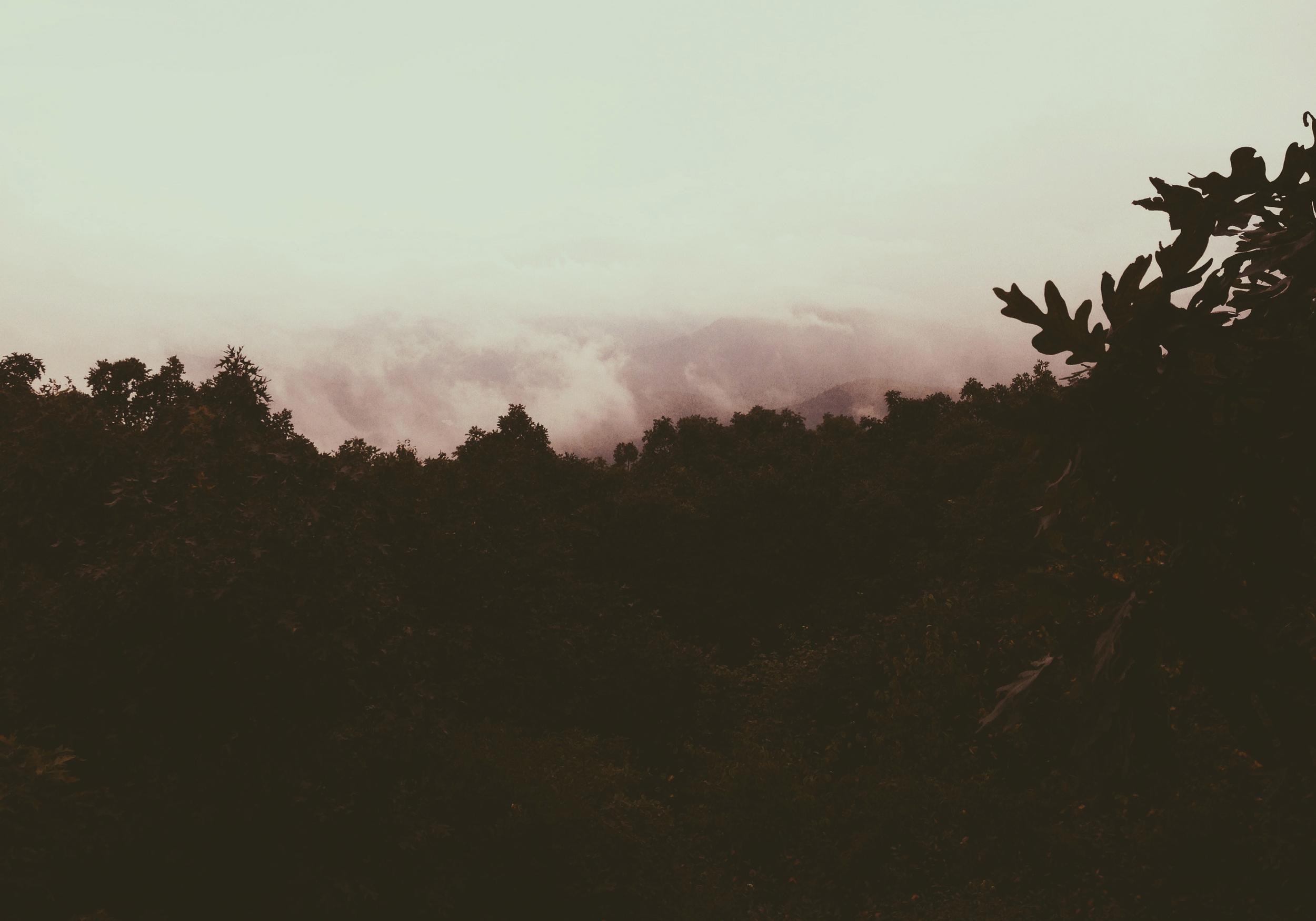 Springer Mountain.jpg
