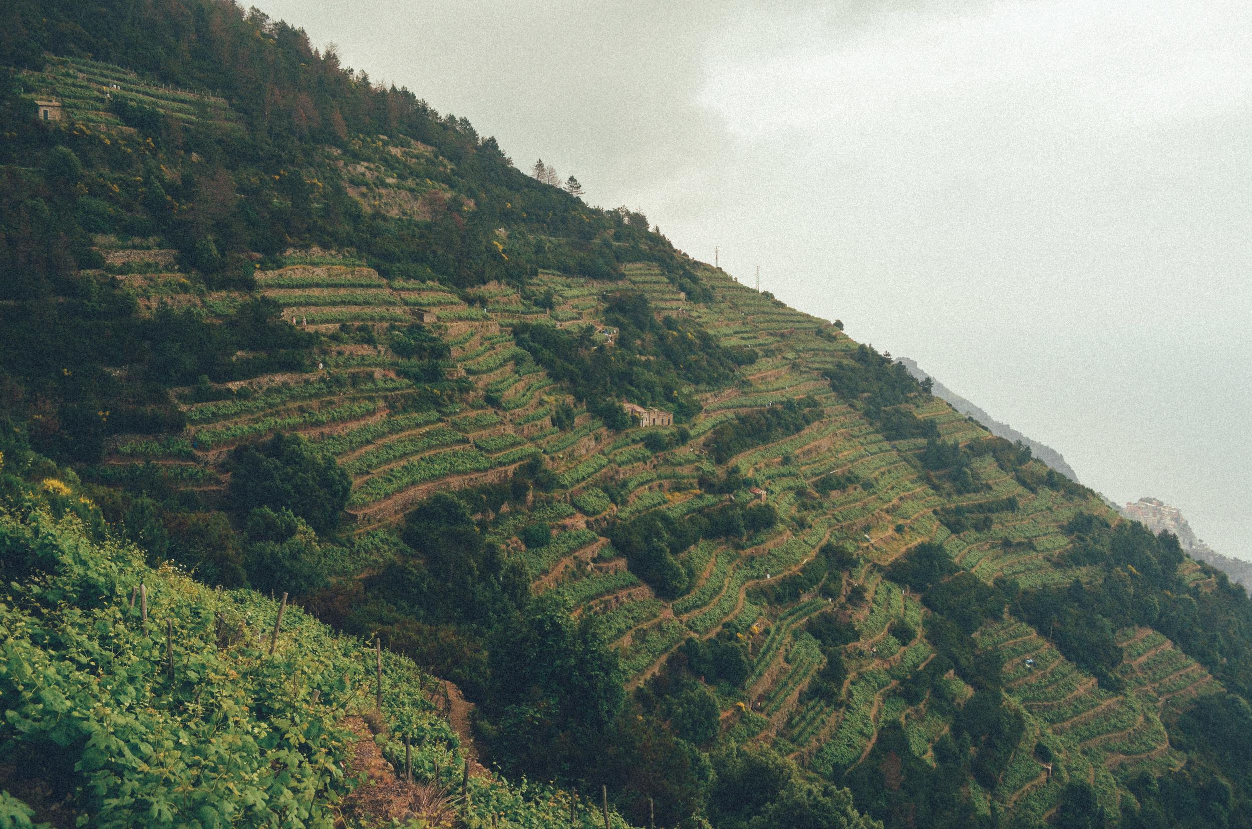 Cinque Terre (29 of 41).jpg