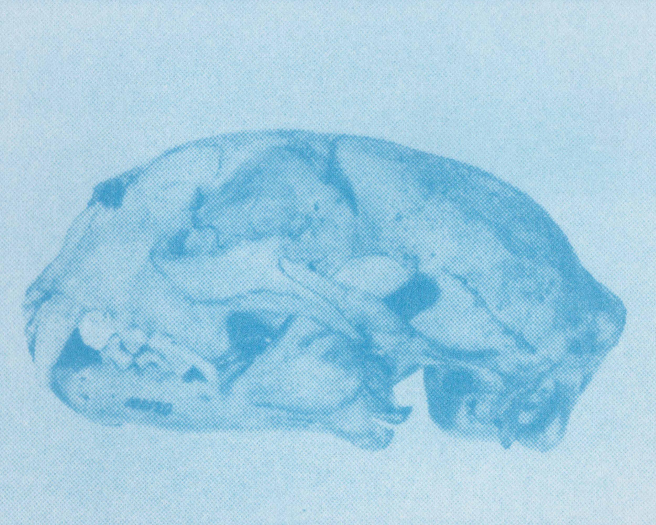 skull web 1.jpg