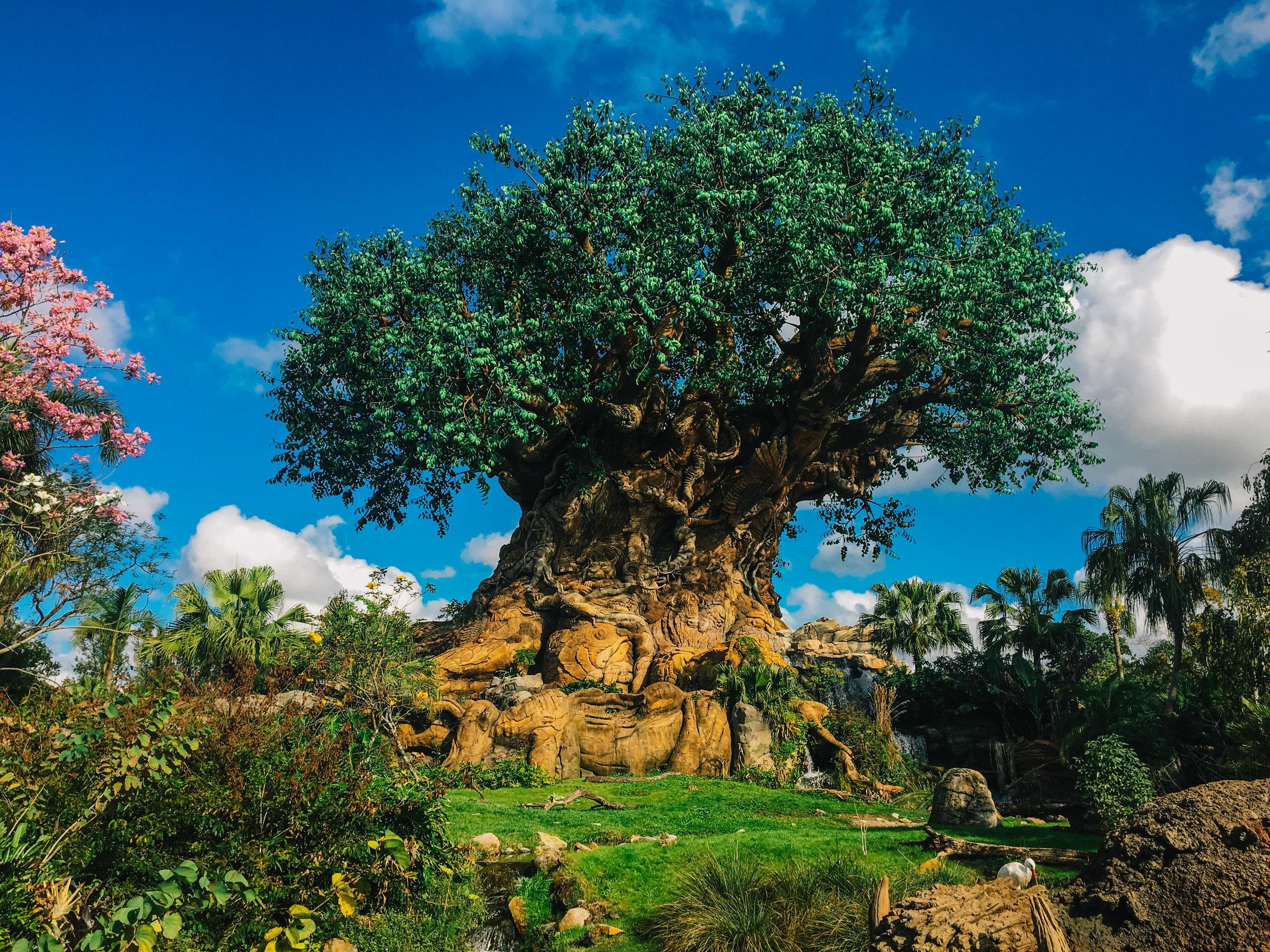 Disney Magic (6 of 39).jpg