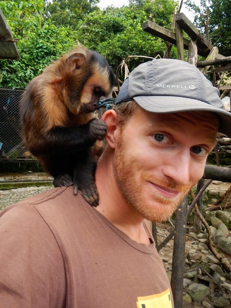 A Capuchin cleaning behind Andrew's ears