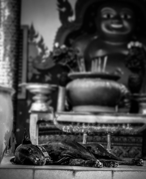 Dog sleeps in Koh Samui, Thailand by Drew Redmond