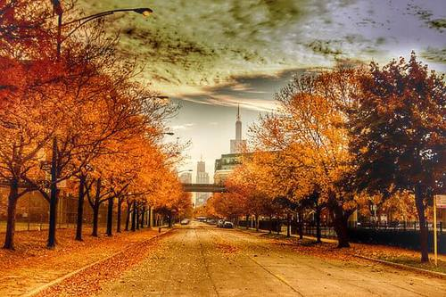 The changing leaves in Uptown Chicago