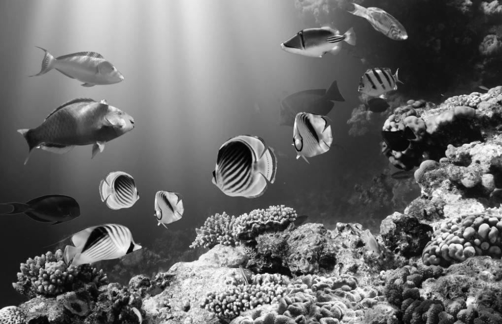 scuba-dive-australia.jpg