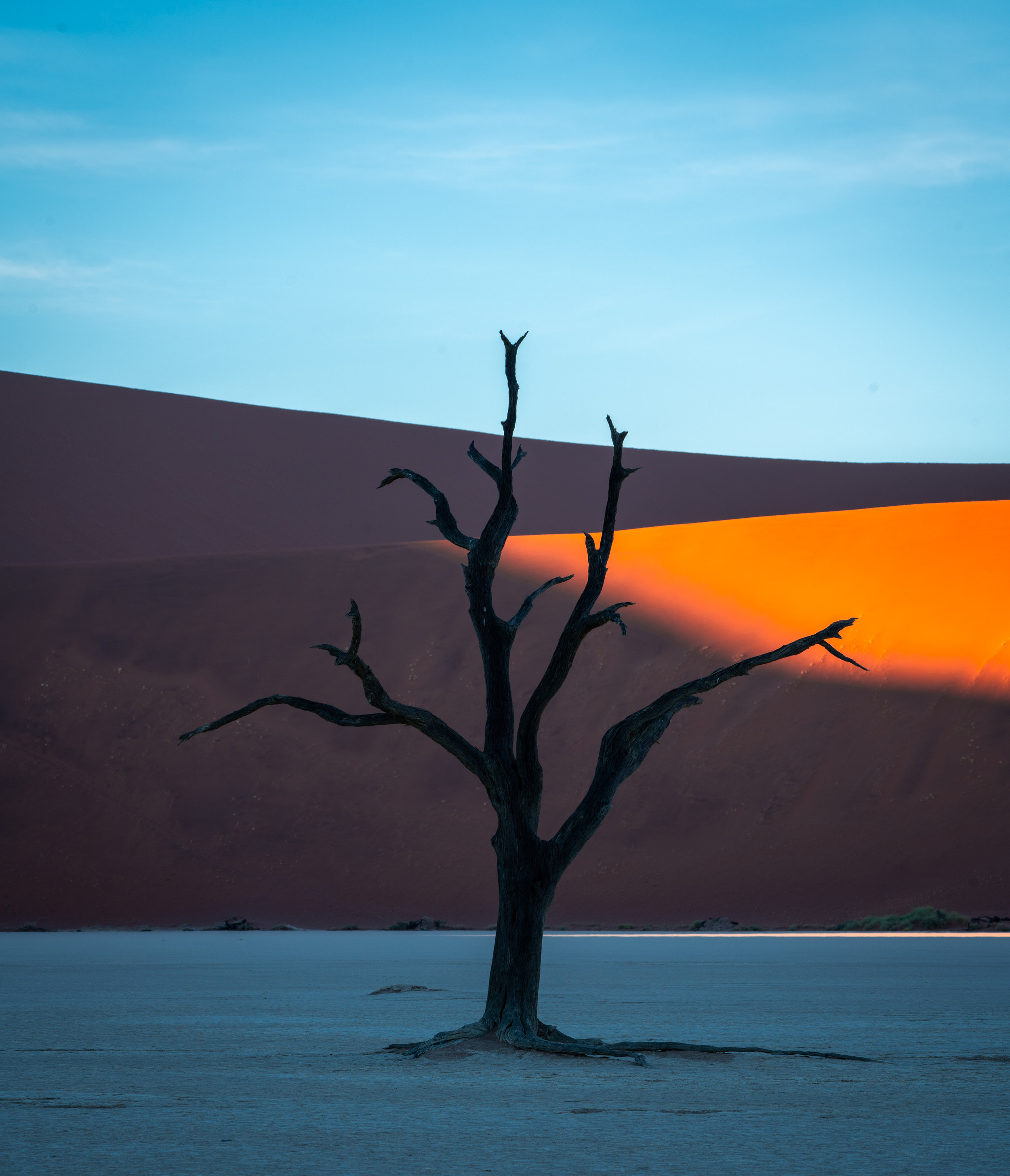 Tree and dunes in Deadvlei