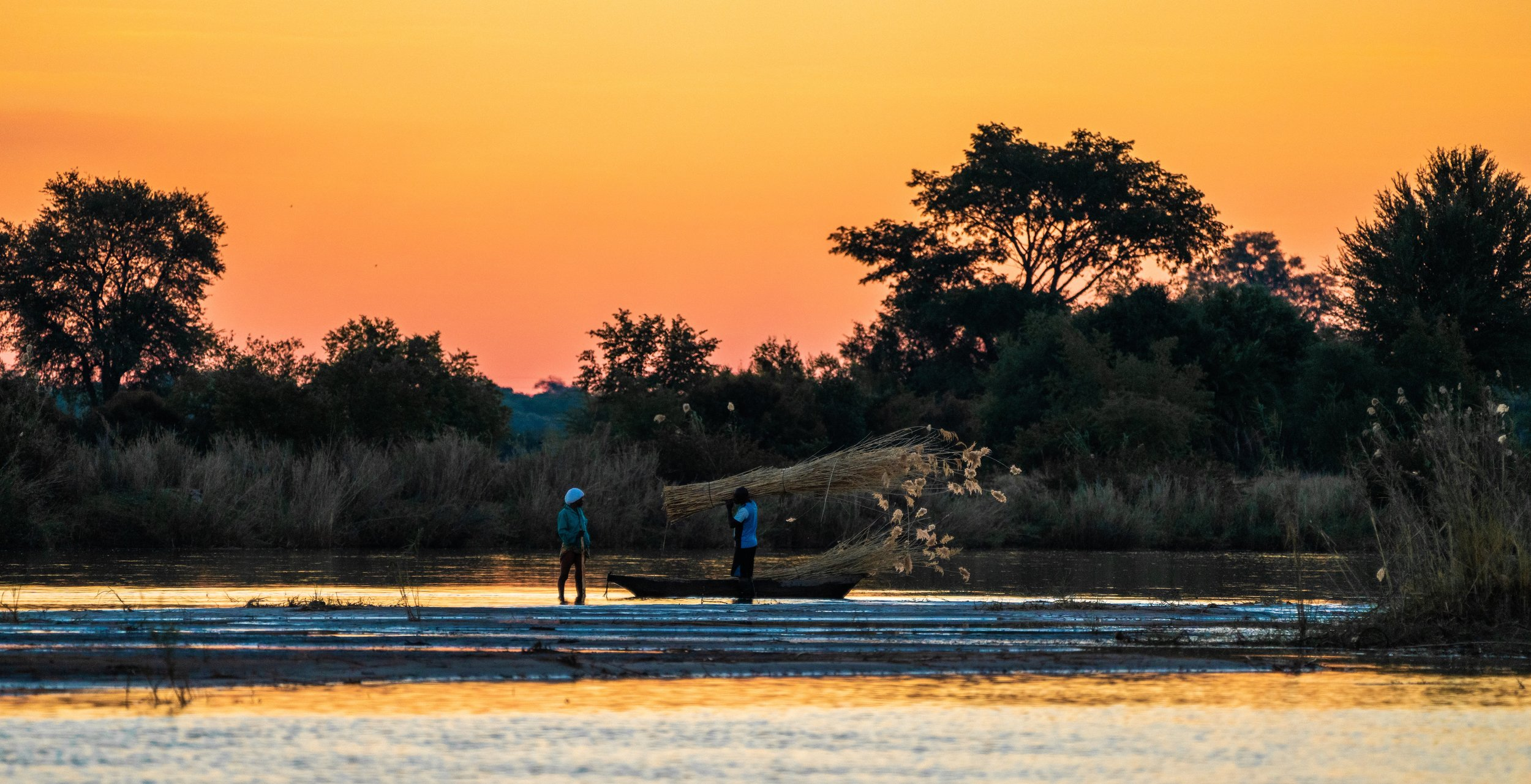 Villagers collecting papyrus reeds at sunset, Ngepi Camp