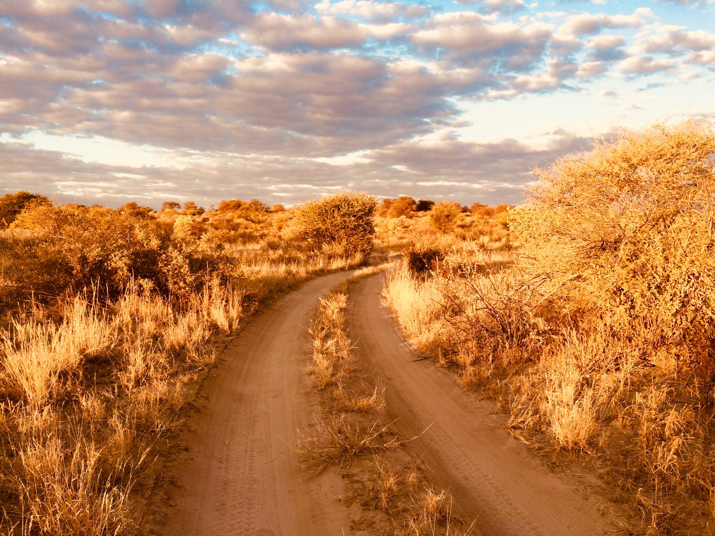 The open roads of the Kalahari. Note the conspicuous absence of lions, black-mained, or otherwise