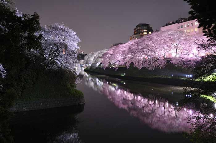 Ueno at Night.jpg