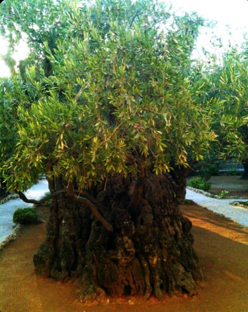 garden of geth.png