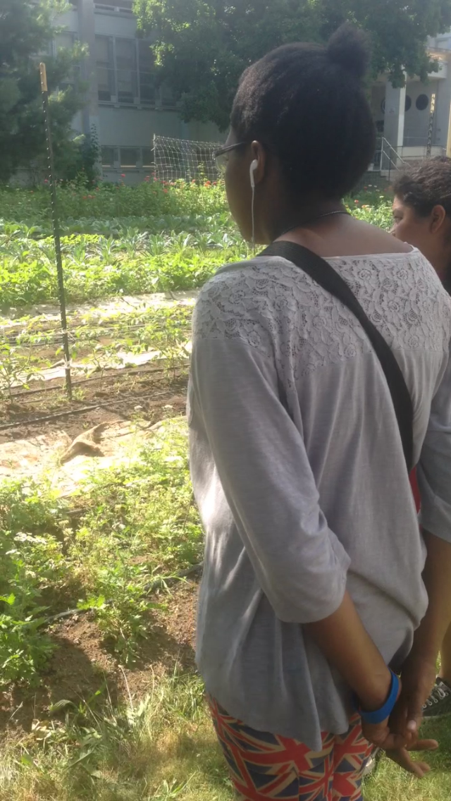 The students visit the student run Youth Farm at the Highschool for Public Service in Crown Heights.