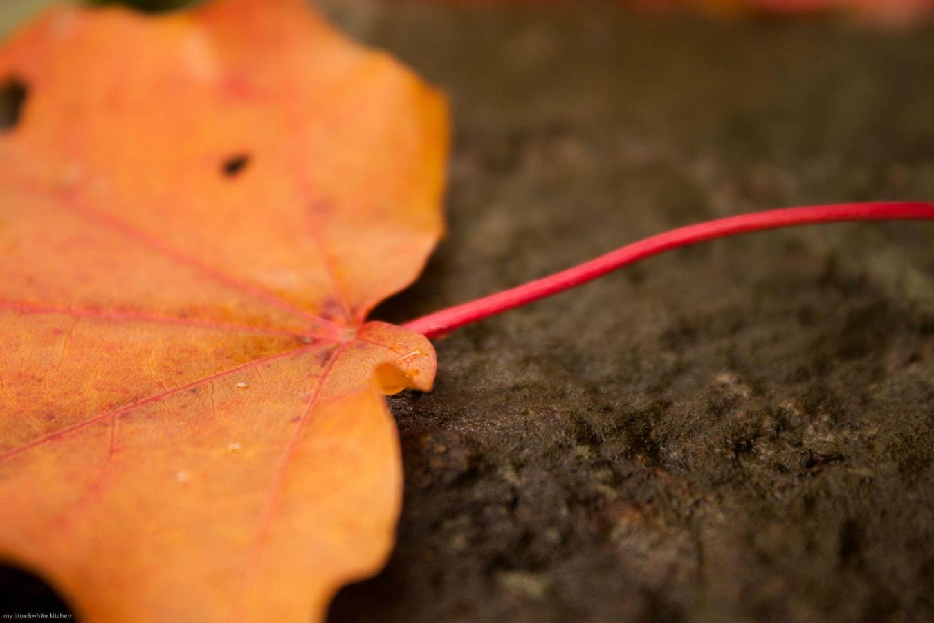 orange_fall_small.jpg