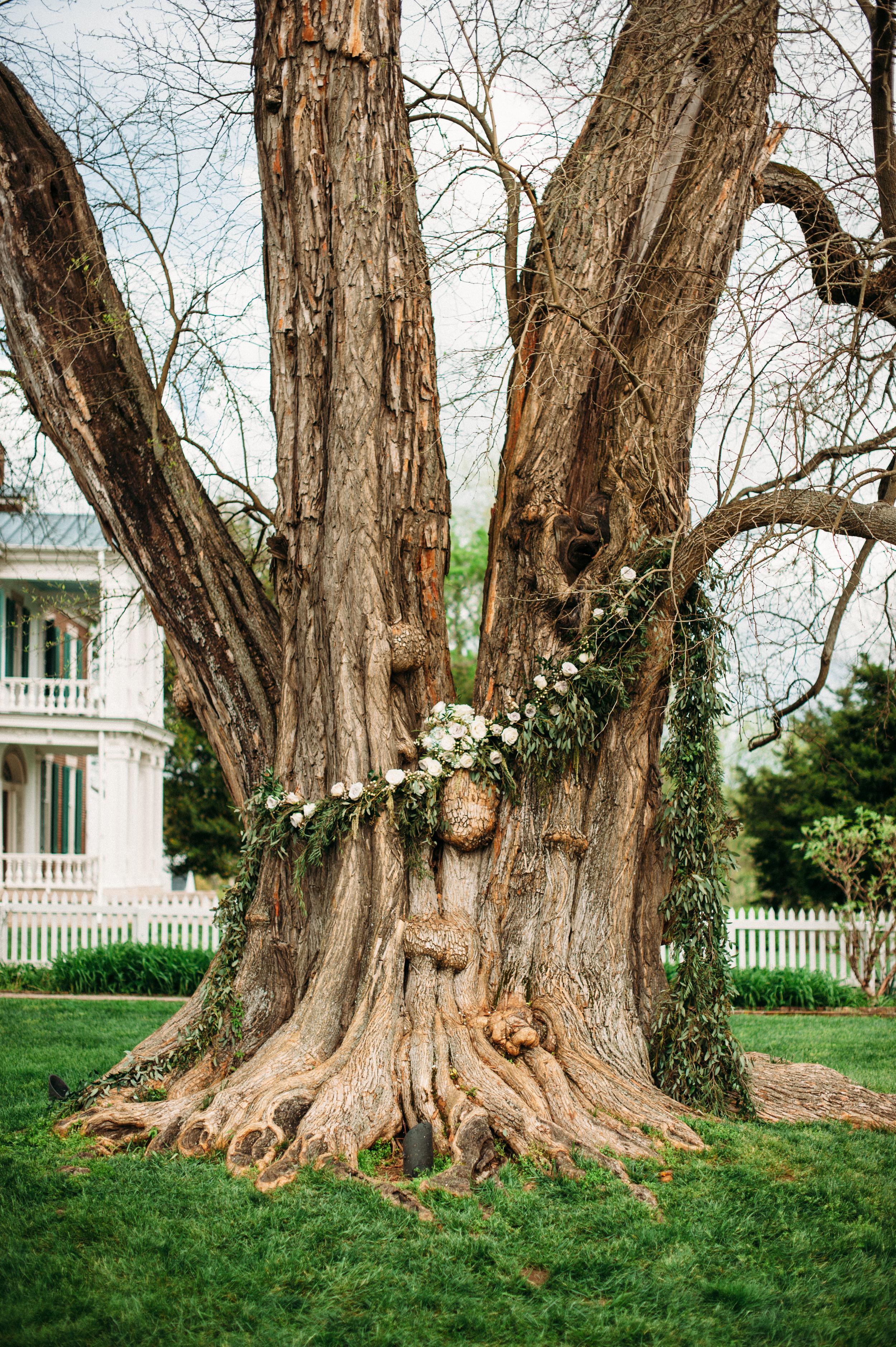 Osage Orange Tree at Carnton Plantation // Nashville Wedding Floral Design