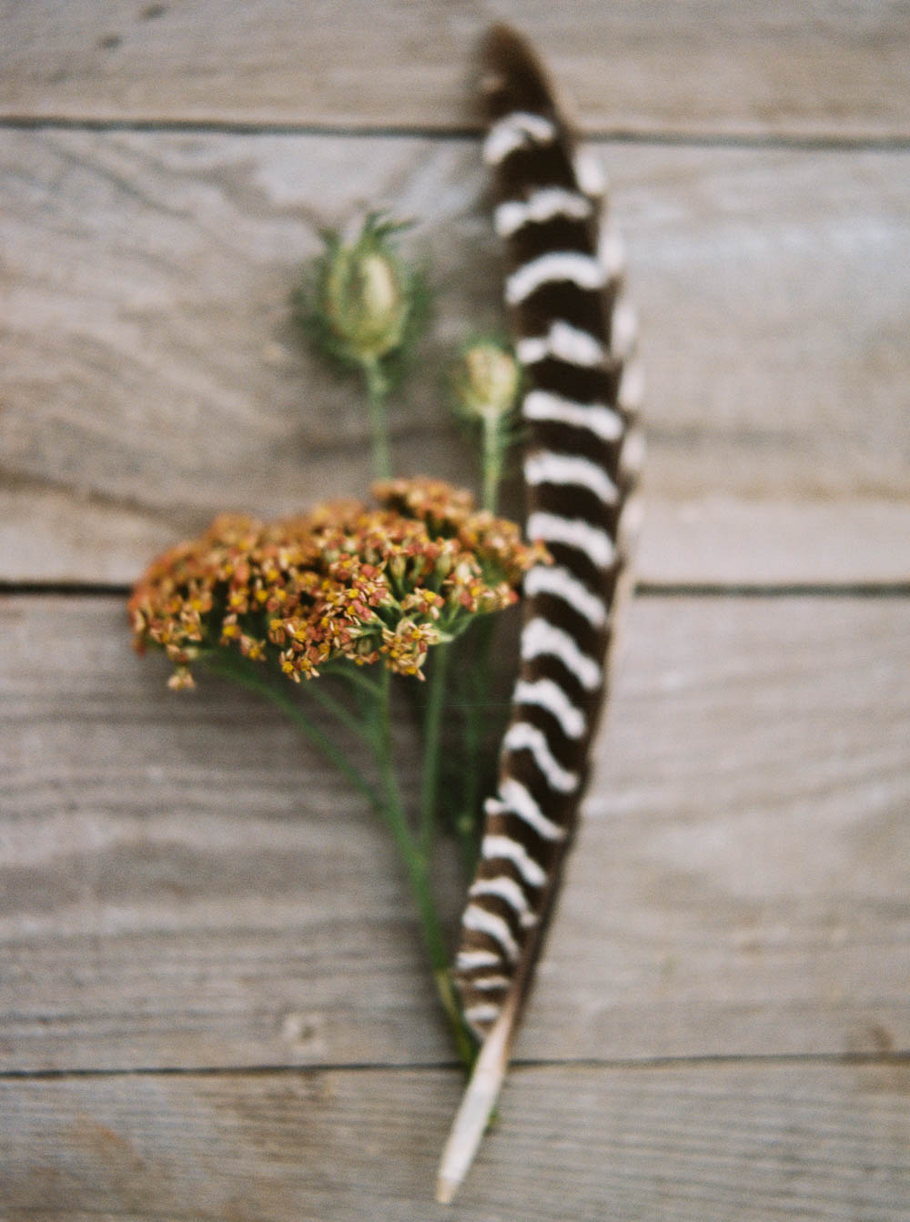 Cottage Yarrow and Pheasant Feather // Nashville Flowers
