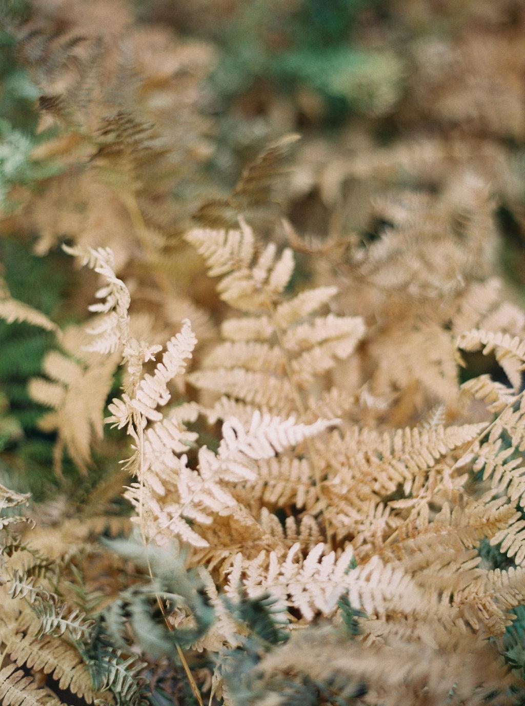 Golden Fern in Montana