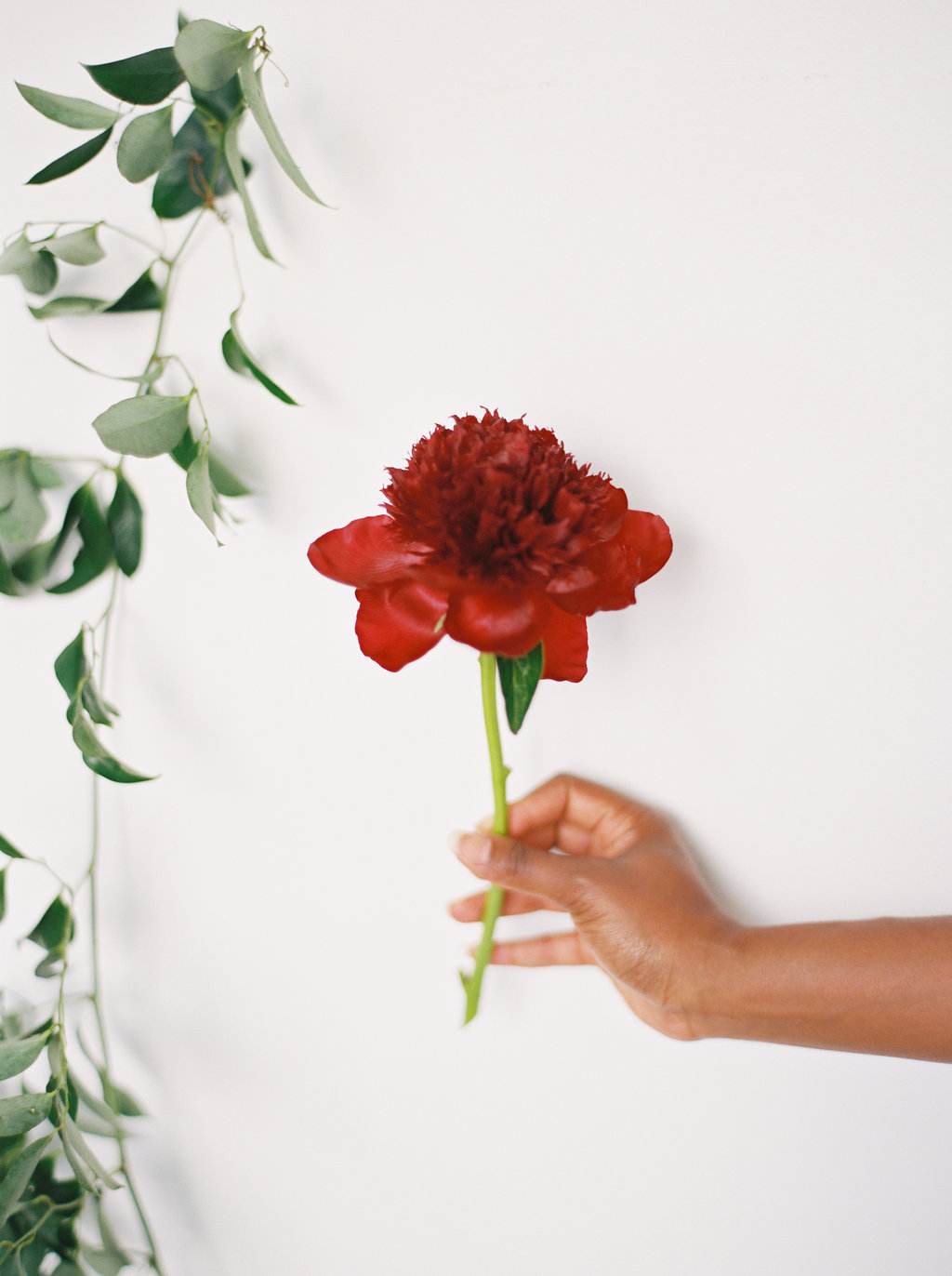 Red Charm Peony // Southeastern Wedding Florist