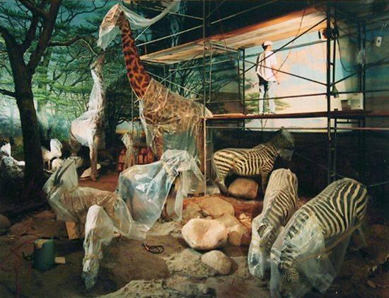 "Richard Barnes   ""Animal Logic""  Approx. Photo Size 46"" x 56"" / Frame O.D. 47 1/4"" x 57 1/4""    $13,000 ( Framed )"