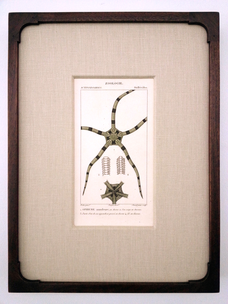 "Antique French Engraving  14 1/4"" (H) x 10 3/4"" (W) Frame O.D.  Regular $760 / SALE $380"