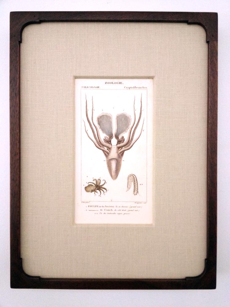 "Antique French Engraving  14 1/4"" (H) x 10 3/4"" Frame O.D.  Regular $760 / SALE $380"