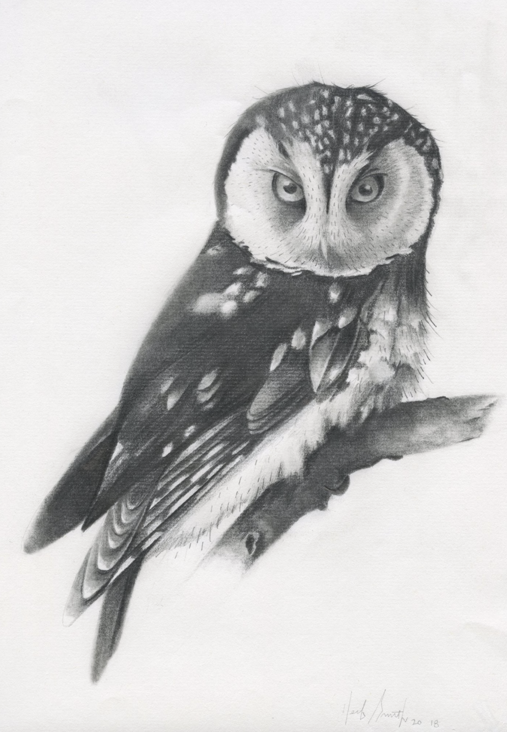"""Herb Smith (American, b. 1981)     Boreal Owl  (2018)    Graphite on Paper    12"""" x 9""""    SOLD"""