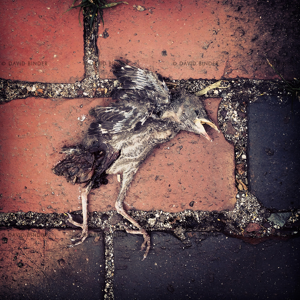 boston_dead_bird.jpg