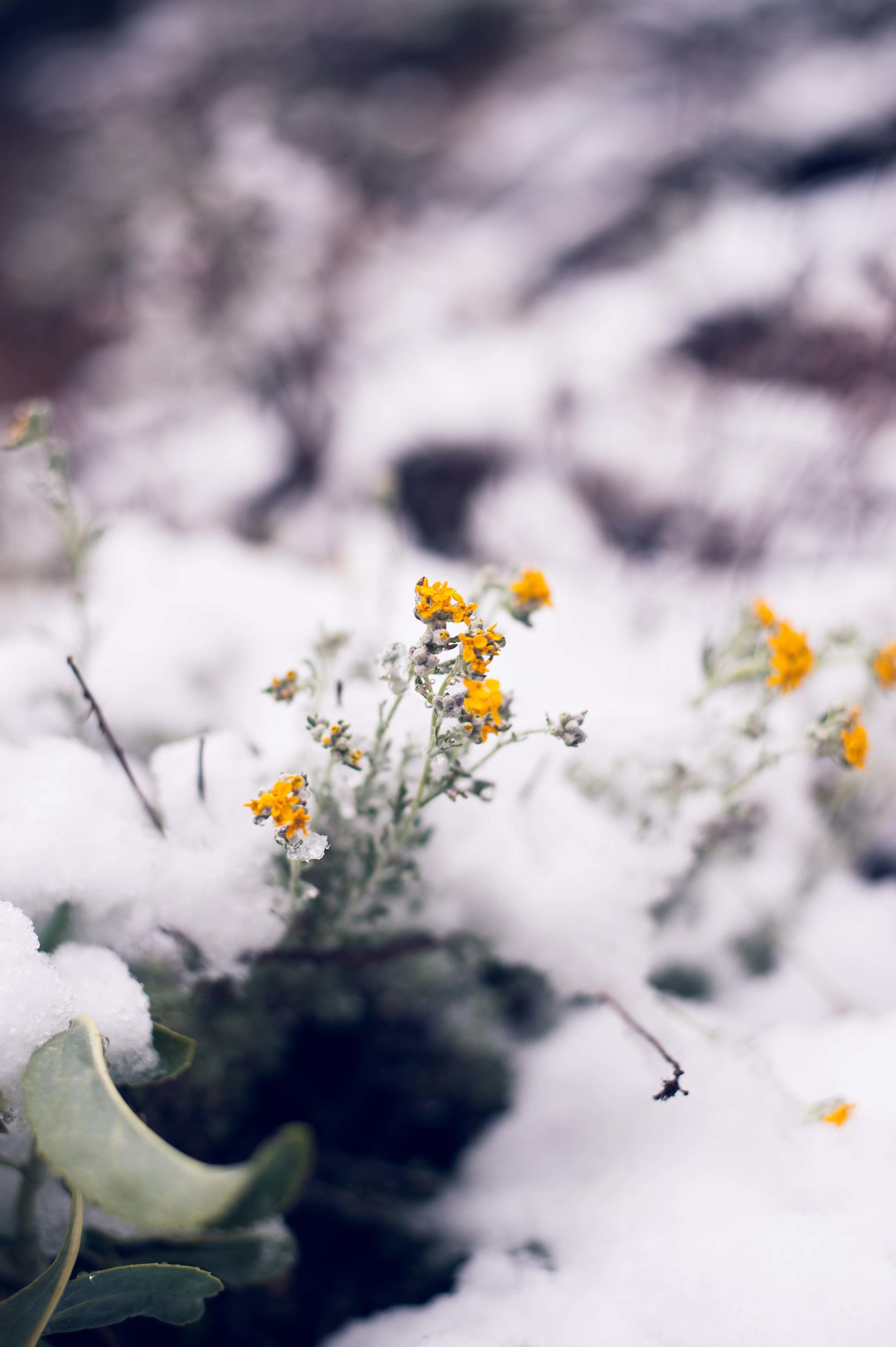 *May 8 Snow-35.jpg