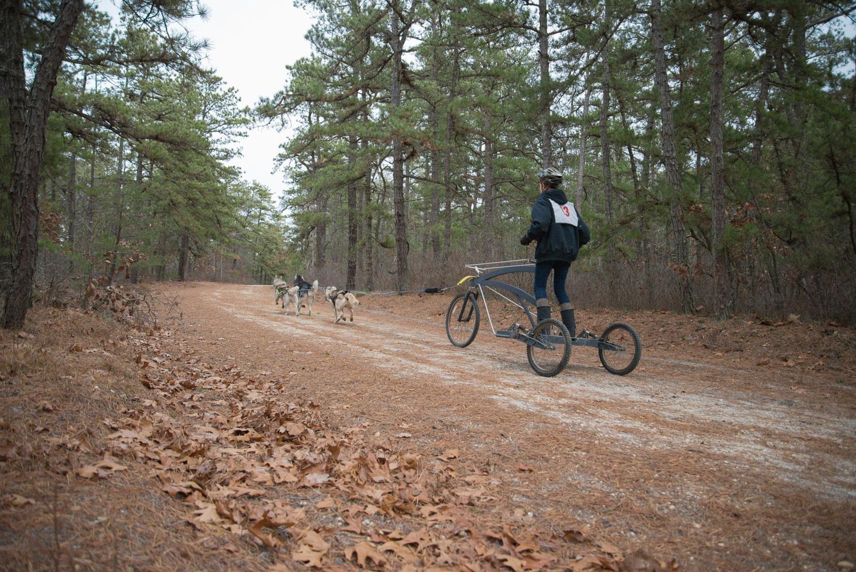 Pine-Barrens-Dryland_Run-November 30, 2013-56.jpg