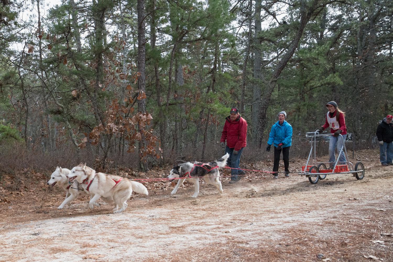 Pine-Barrens-Dryland_Run-November 30, 2013-43.jpg