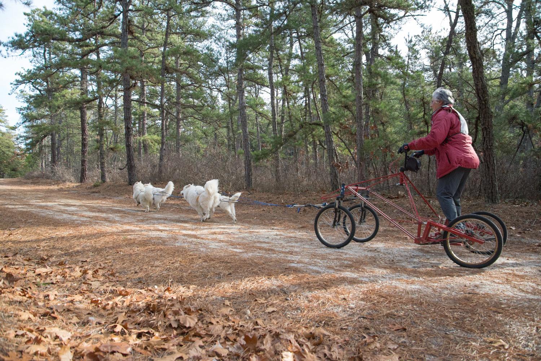 Pine-Barrens-Dryland_Run-November 30, 2013-38.jpg