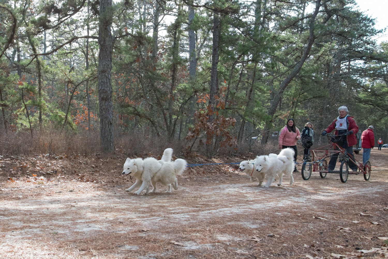 Pine-Barrens-Dryland_Run-November 30, 2013-36.jpg