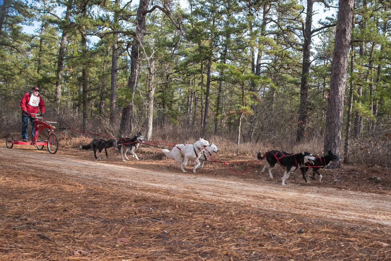 Pine-Barrens-Dryland_Run-November 30, 2013-17.jpg