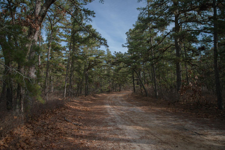 Pine-Barrens-Dryland_Run-November 30, 2013-10.jpg